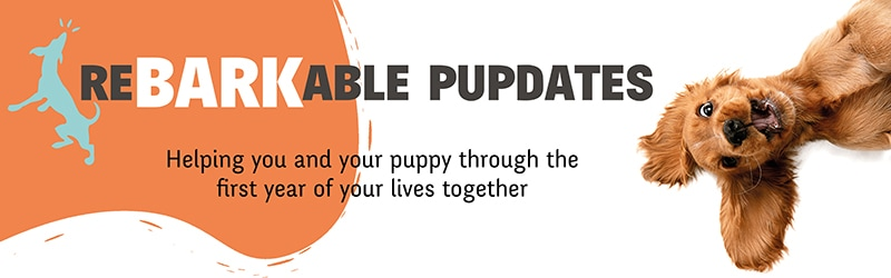 Rebarkable Pupdates your weekly puppy update for training and advice to guide you through your puppy's development