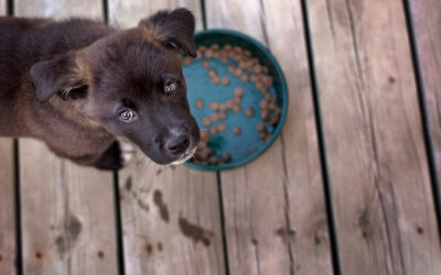 8 Easy Ways To Encourage Your Puppy To Eat Their Food