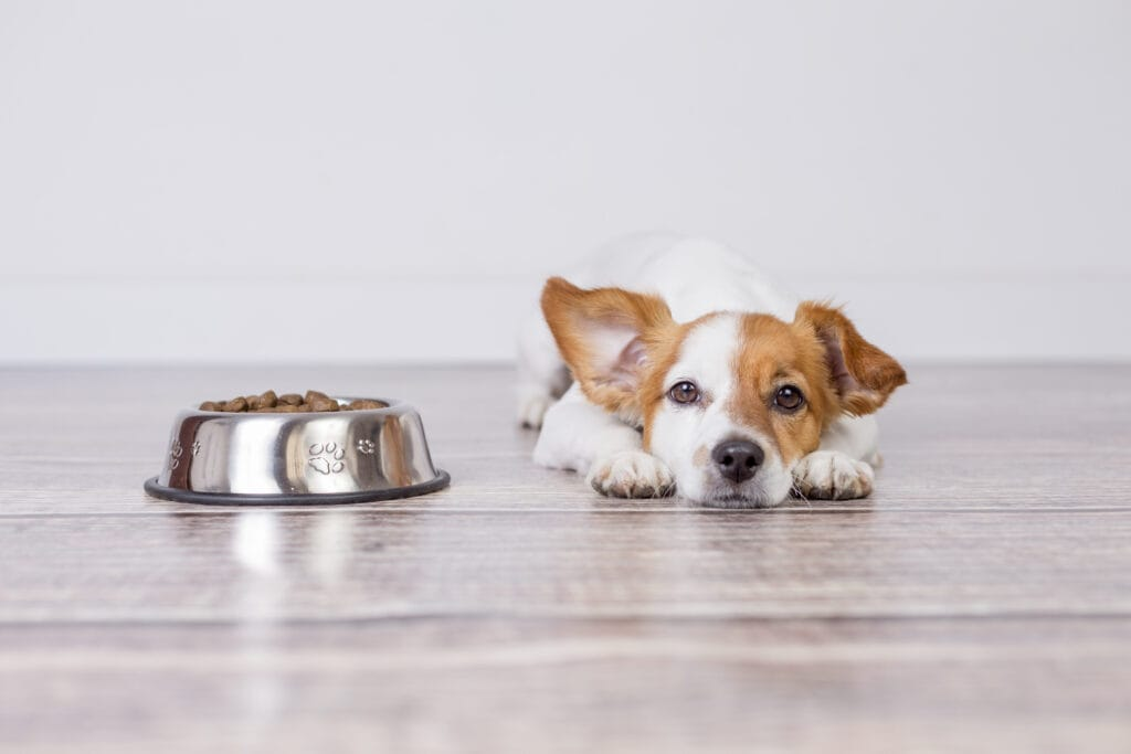 puppy isn't so keen on their food, how do you encourage them to eat?