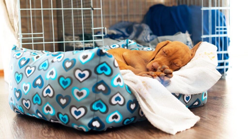 If Puppy's crate is in a draft? They're not going to want to be in there. Do consider this when you're choosing a spot for your pup's crate.