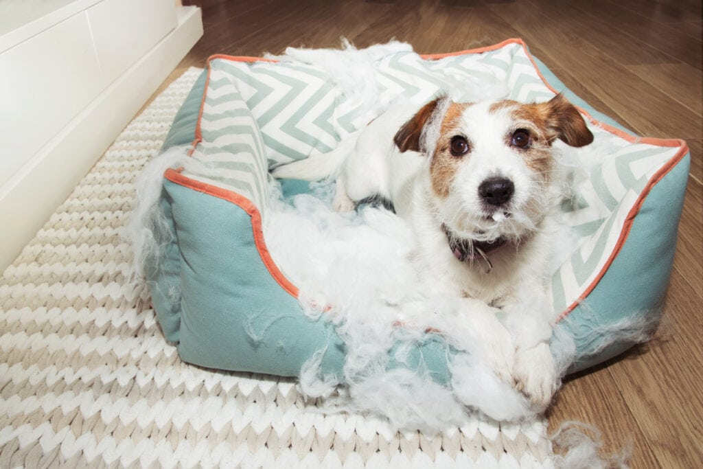 puppy in a bed that seems to have been destroyed...