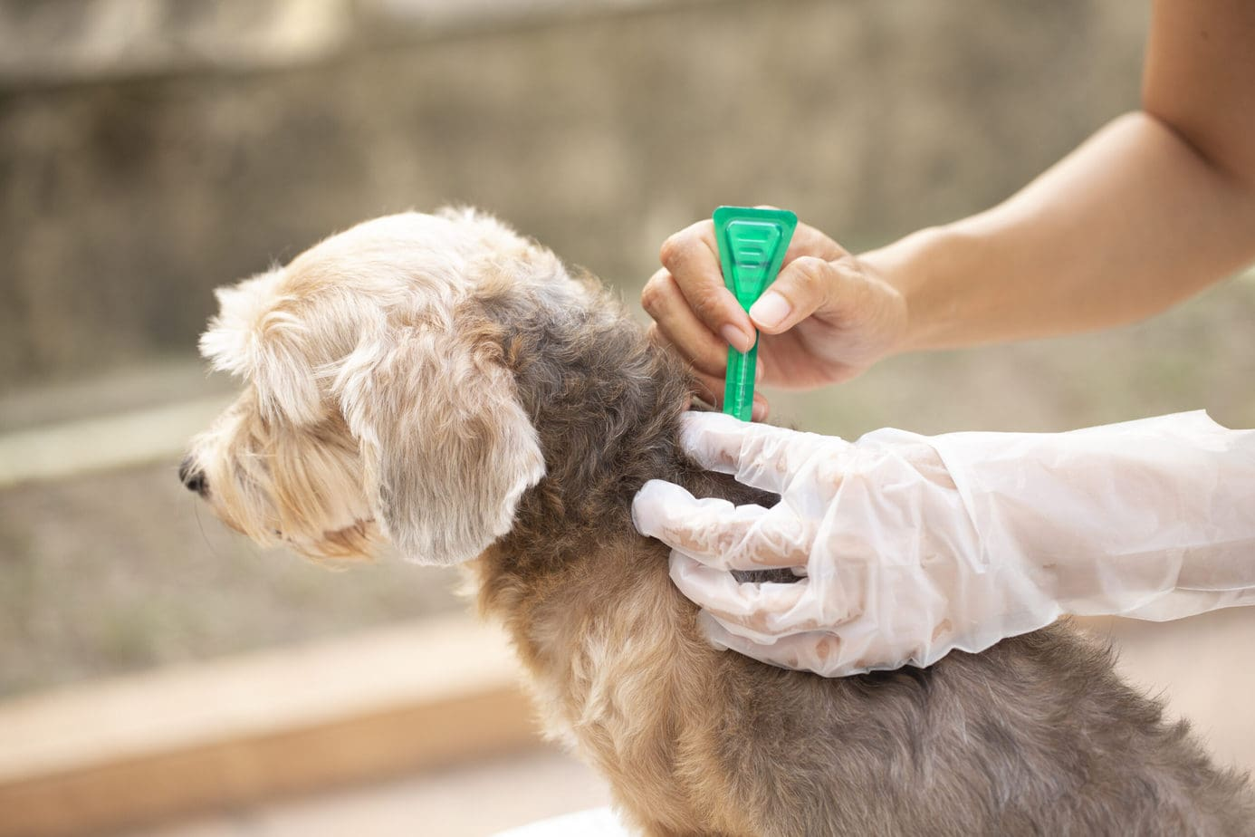 applying flea medication to your puppy is really important and needs to be a part of the puppy starter checklist!