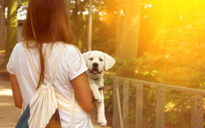 New Puppy Parents Wish They'd Known These 10 Things Before Bringing Home Their Puppy.
