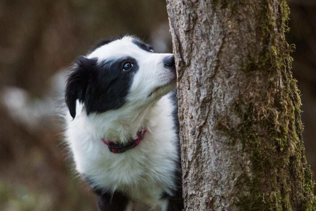 Sniffy walks a wonderful way to bring the pace down and help your puppy to burn off less energy and allow their food to turn into some gained weight