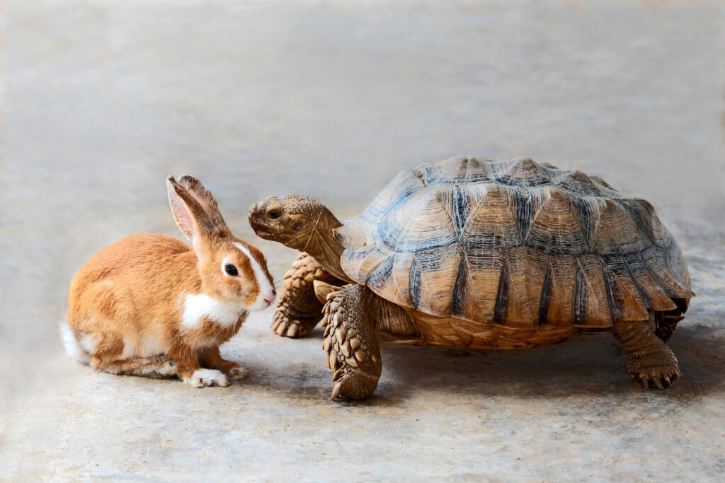 tortoise and the hare - there are different ways of teaching, but sometimes? It's the thorough way of doing things, especially with puppies