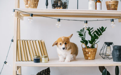 Your Puppy Support Network – The 6 Critical People You Need
