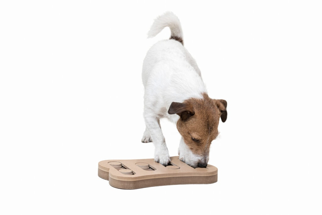 Puzzle toys can be wonderful enrichment which can help with Maslow's hierarchy of needs, and raising that 'base happiness' can really help if your pup is reactive.