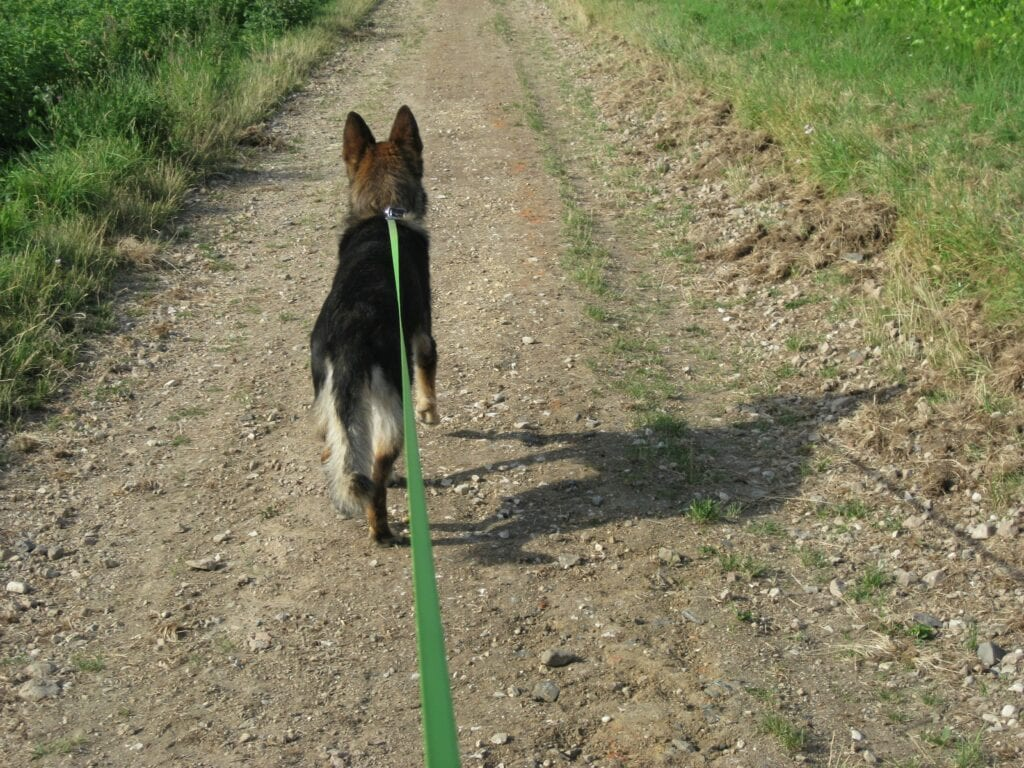 using a long line with this German Shepherd puppy on a trail trying to perfect that recall!