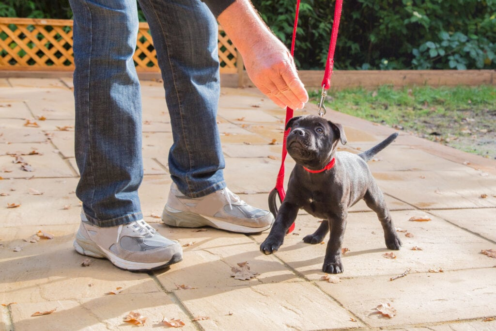 Learning how to loose lead walk with my pupdates!
