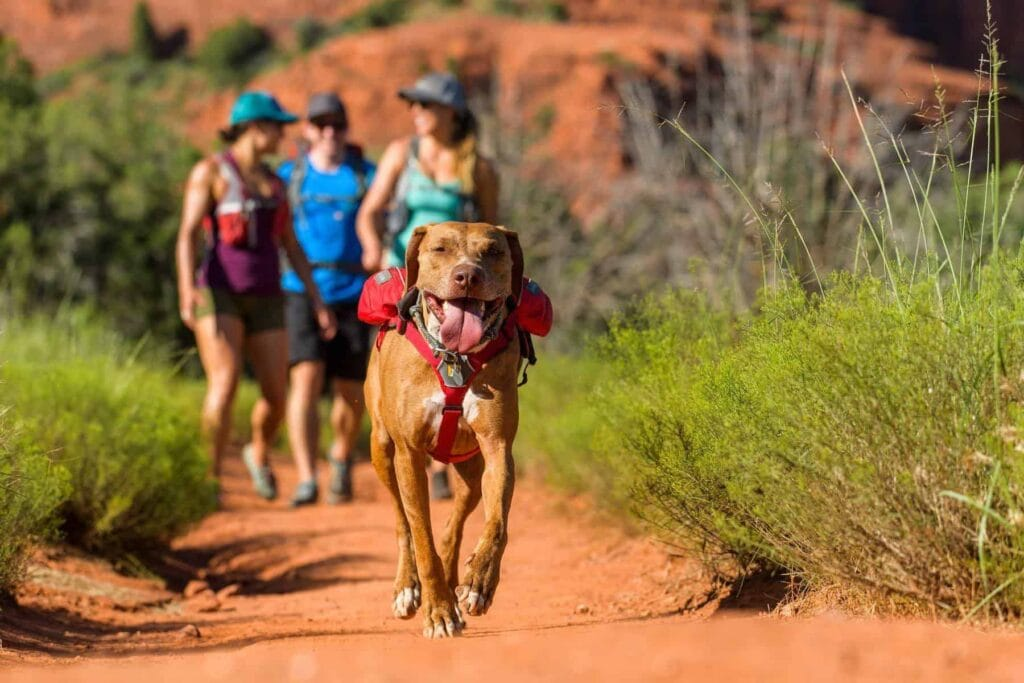 Backpacks can be wonderful for helping your dog to work harder during their walk, please do make sure that they're already strong before trying this!