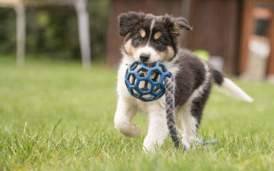 2021's Best Puppy Toys – And They're All On Amazon!