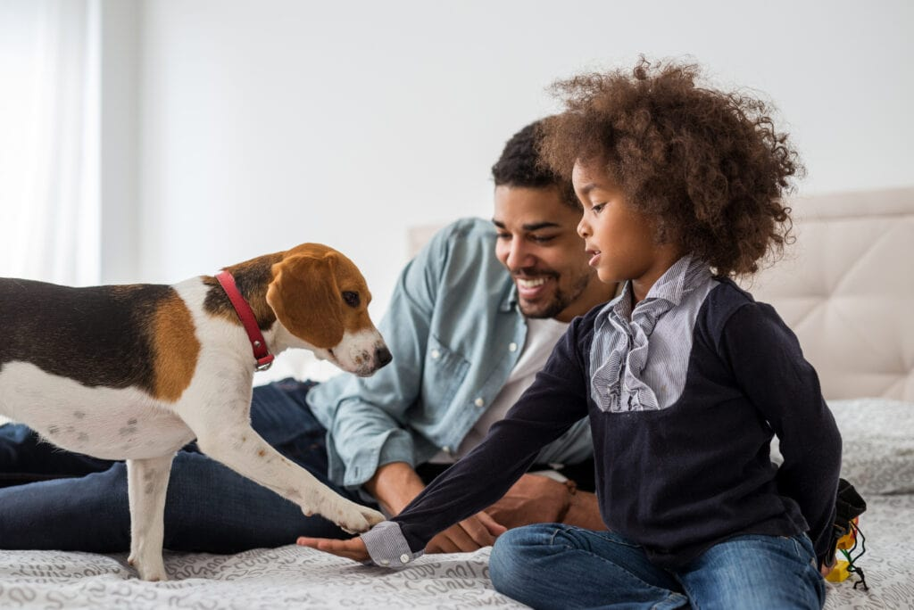 a family and their beagle being introduced positively