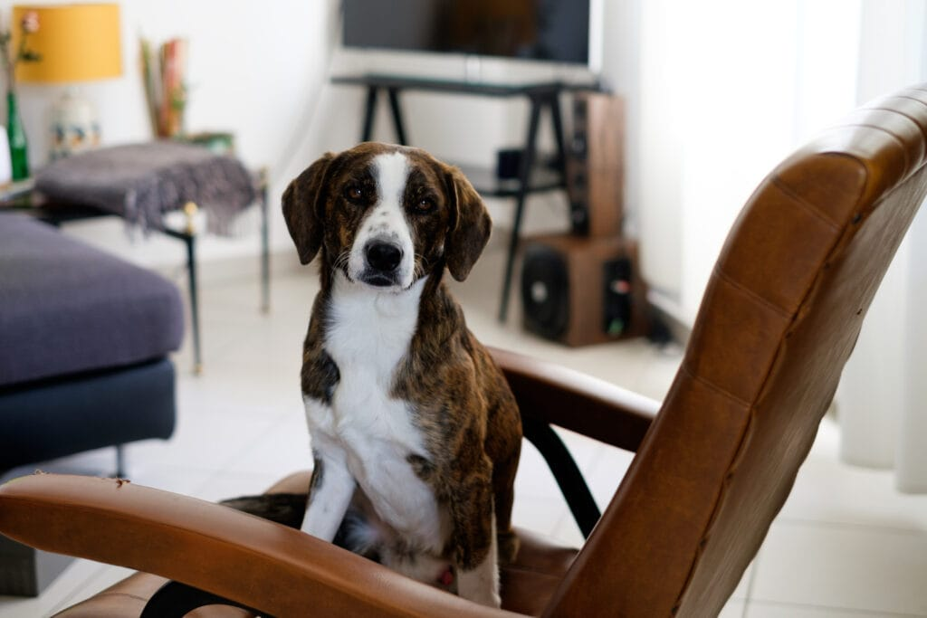 Leaving puppy home alone sitting on chair