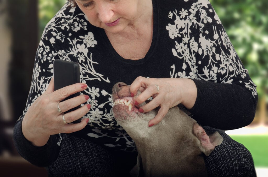 checking teeth with an online vet on video call - pawp can do that!