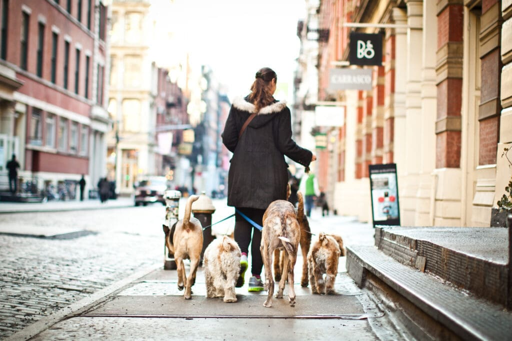 every support network needs a dog walker! they can really help you take the stress out of being a new puppy parent...