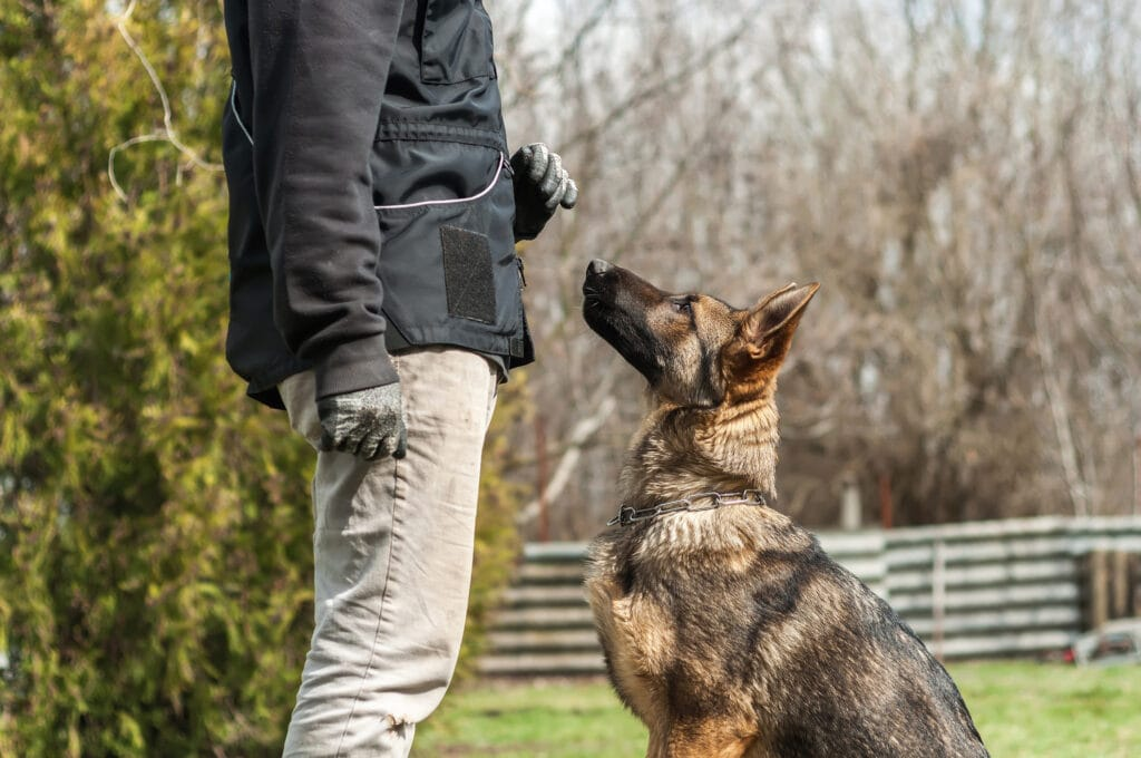 dog at training session with puppy parent, what a wonderful way to help prevent bites from happening, training! Such a simple thing, but so powerful