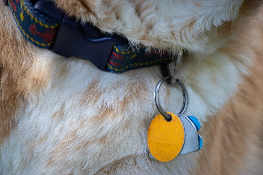 if fireworks scare your dog, ID tags and microchips are something you need to make sure are up to date and worn