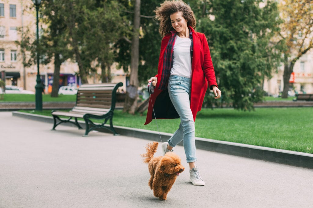 lady walking poodle puppy to keep him from being home alone too long