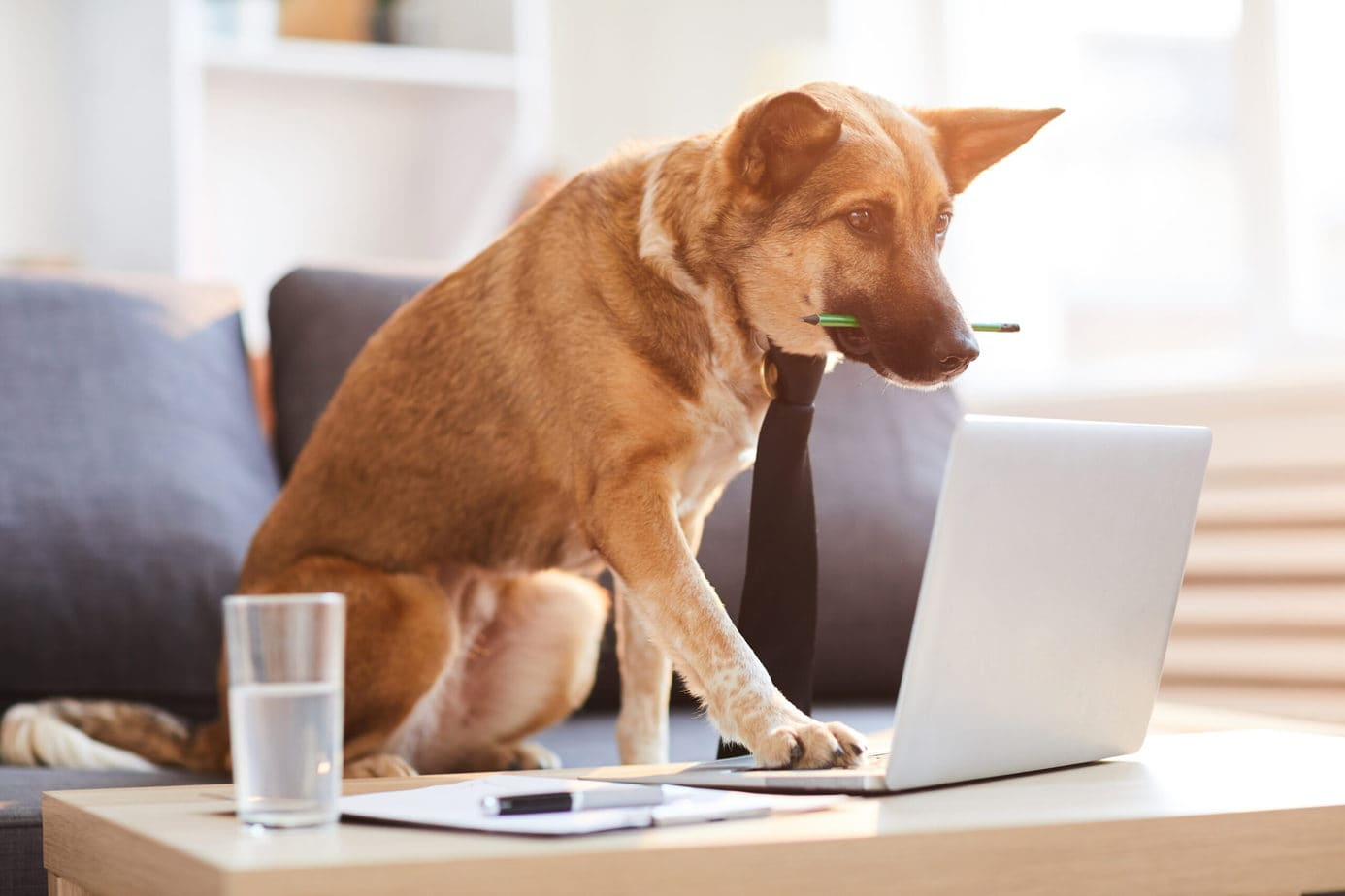 Best Online Dog Training 2021 (By A Professional Trainer)