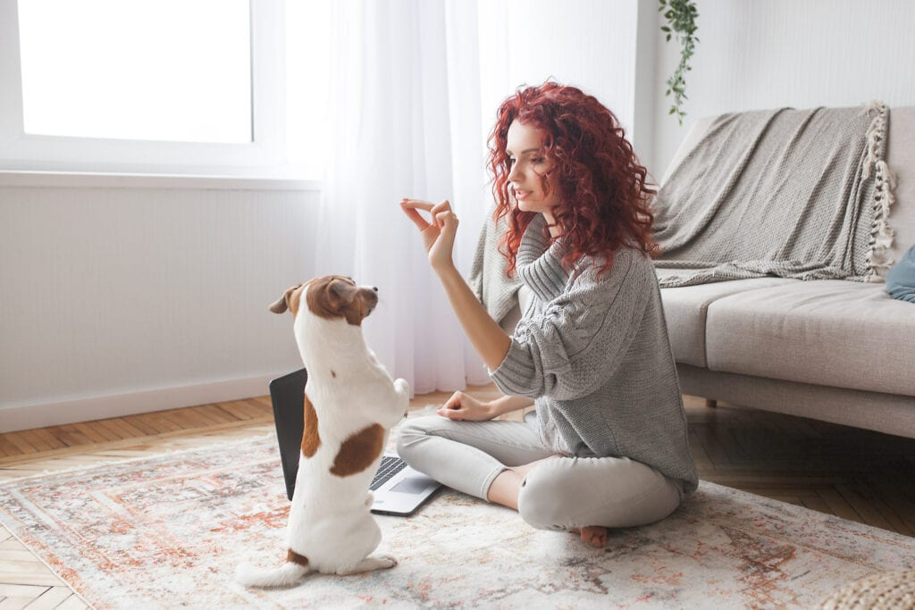 lady and jack russell terrier doing online training together