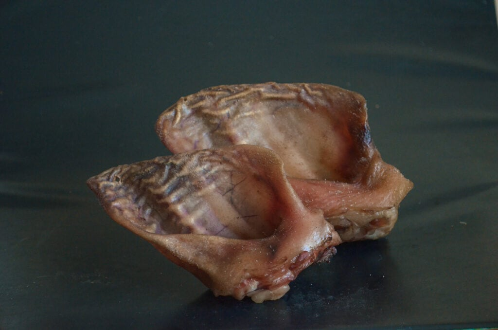 a pair of pig ears a wonderful eco-friendly natural treat option