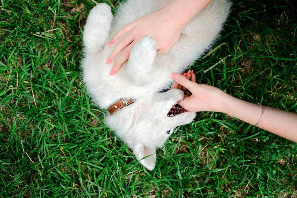sometimes puppy biting seems cute, but if not properly taught to control themselves, this can result in some bad interactions with people.