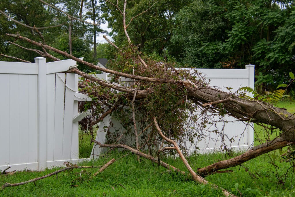 fallen tree on a physical fence.