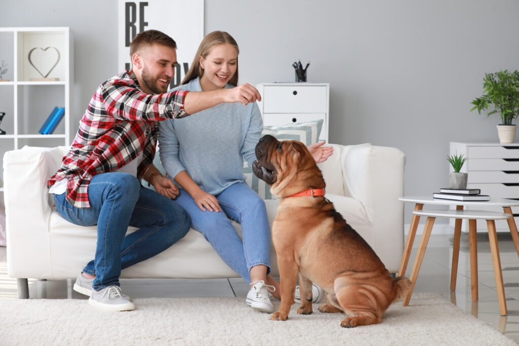 family training sharpei together