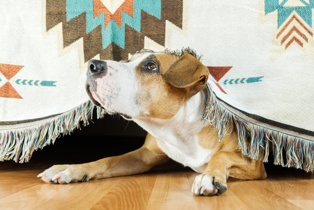 the fear of big noises is really terrifying for some dogs, causing them to hide.