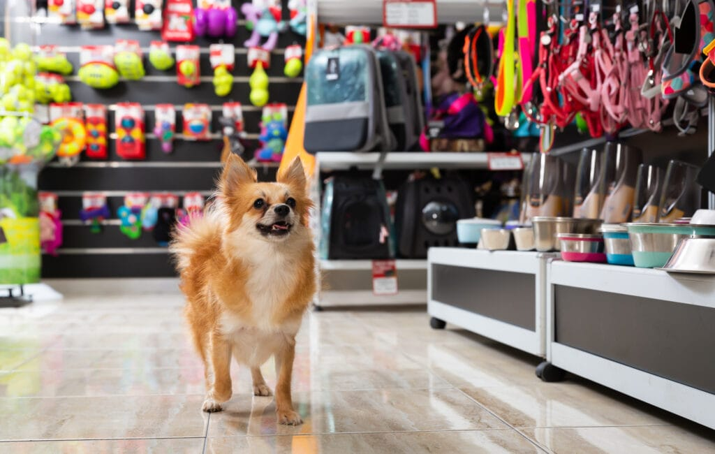 dog in a shop, helping tire him out ahead of july 4th fireworks