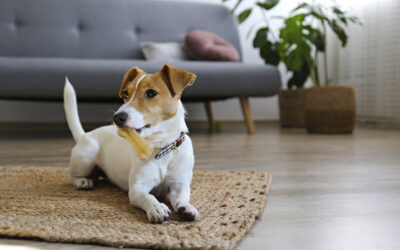 6 Easy Tips For When Puppy Training Becomes Stressful, Exhausting, And Stops Working