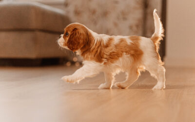 12 Socialization Questions To Set Your Puppy Up For Success