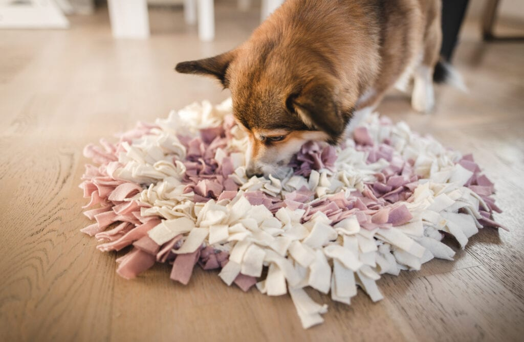 Corgi pup playing with a snuffle mat, felt strips are attached to a mat creating a great surface for your puppy to snoot through