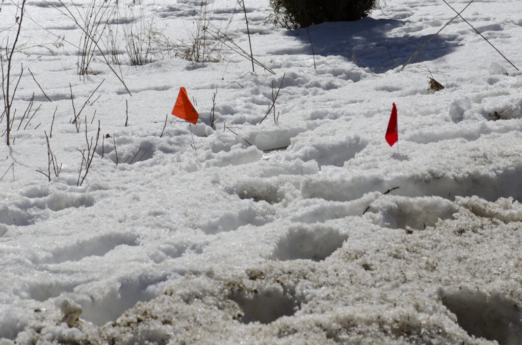 small flags of an invisible fence, clearly visible in snow too.