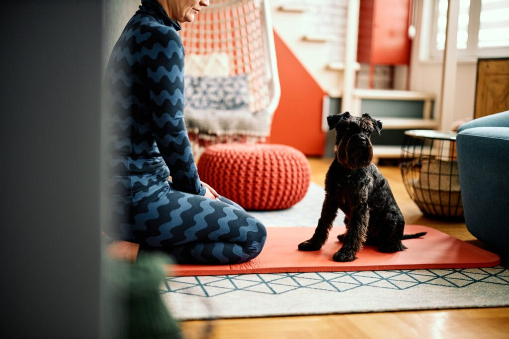 schnauzer having lessons at home with his mum mom owner