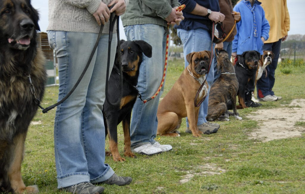 The old way of training? Why go to classes when the best of 2021's online dog training can work for you instead?