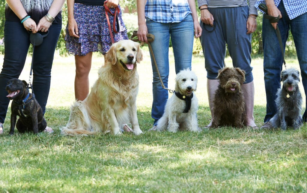 the social aspect of in person dog training classes,
