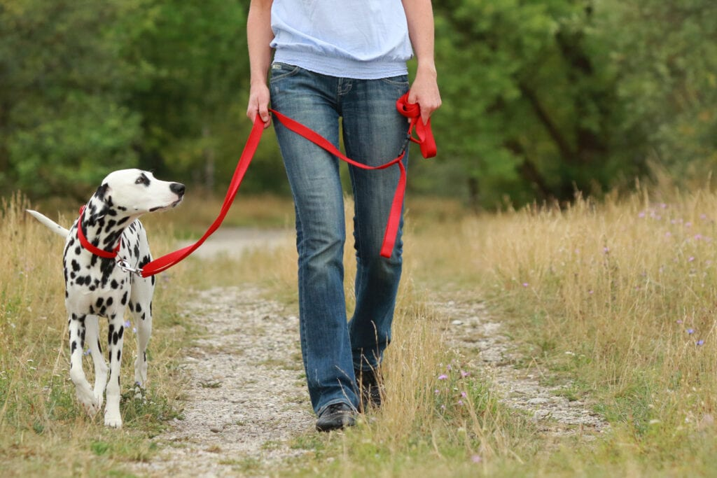 loose leash vs heel, what's the difference?