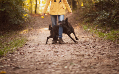 5 Fun & Practical Tricks For Your Puppy To Learn