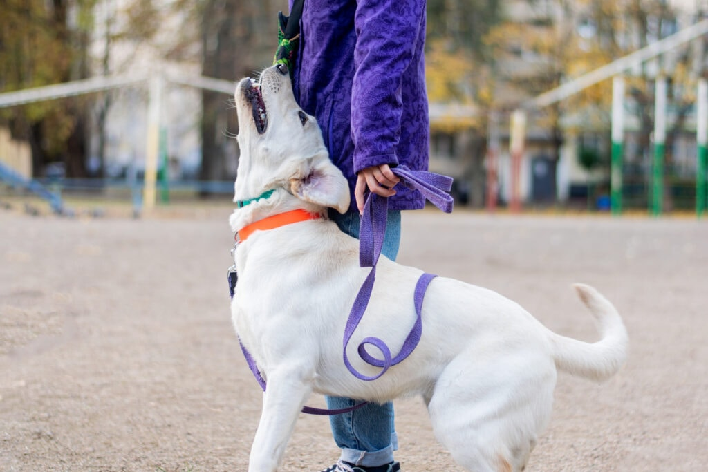 walking nicely on a leash isn't impossible!