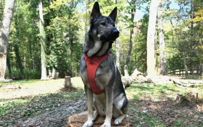 Ruffwear Front Range Harness: The Fit, The Durability & Everything Else – An Honest Review