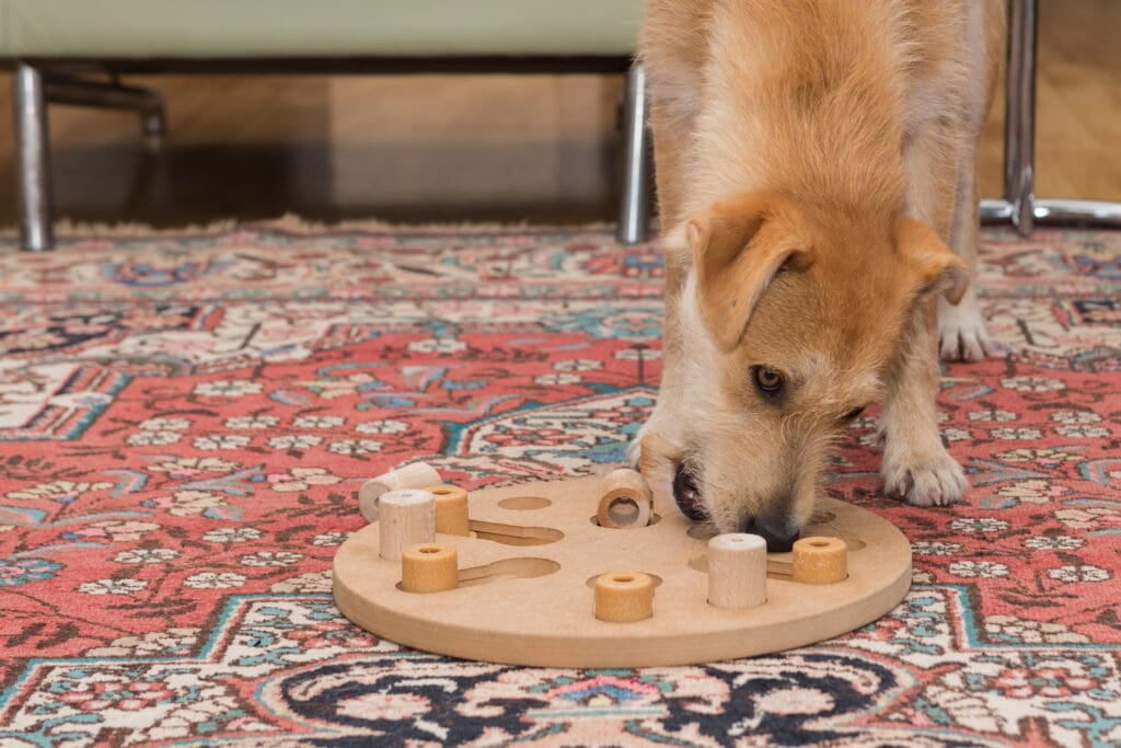 puzzles like this are great for dogs who are post-surgery and in recovery