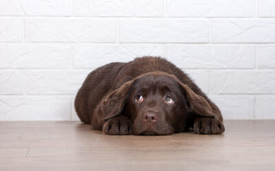 Your Puppy's Second Fear Phase – Understanding it And What To Watch Out For.