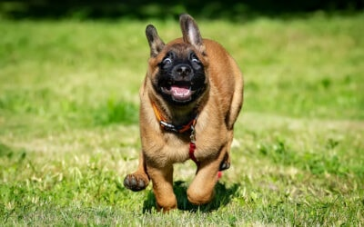 Zoomies: 4 Reasons For Your Puppy's Secret Stash Of Energy.