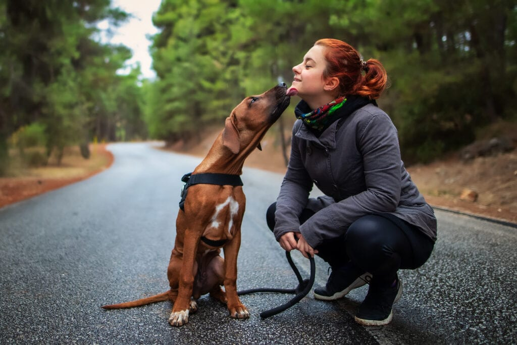 your puppy can enter the second fear phase from six months, larger dogs tend to experience it later