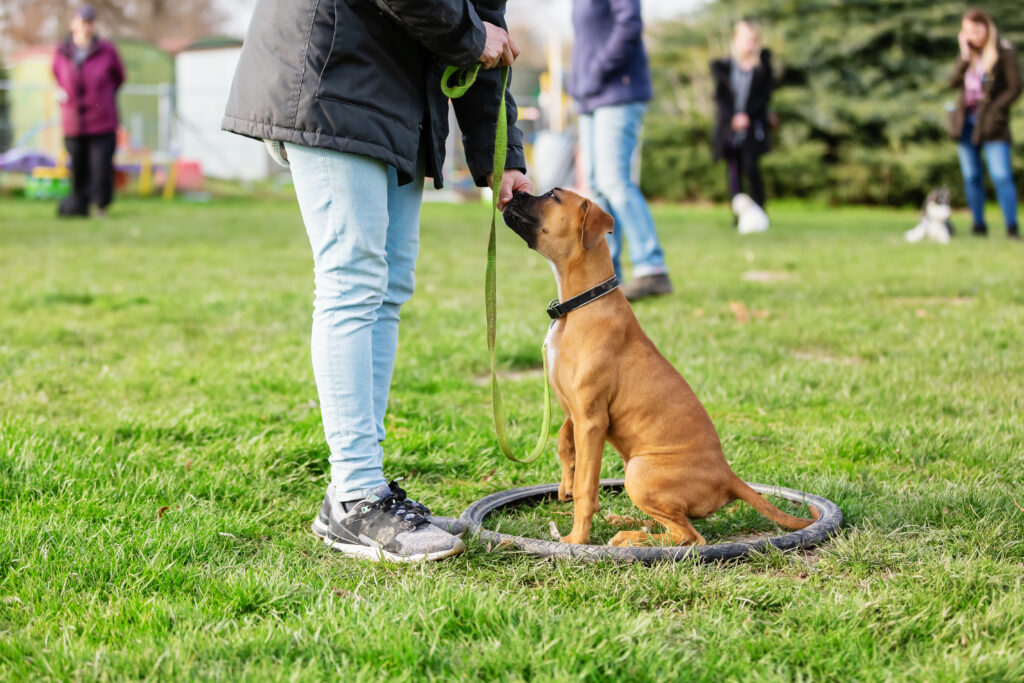 training your pup and working on the 3D's can really help them to overcome their fears