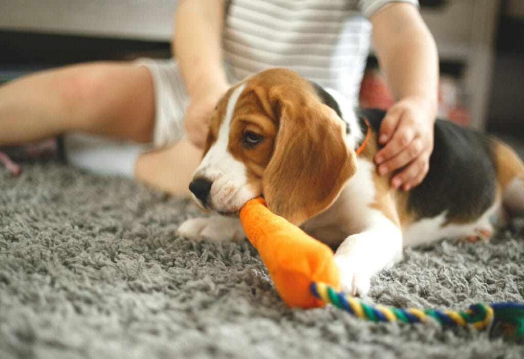 a puppy mill puppy may find it difficult to interact with toys when they get home