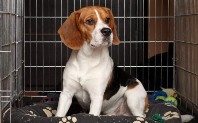 Crate training: Training Your Puppy To Love Their Crate.
