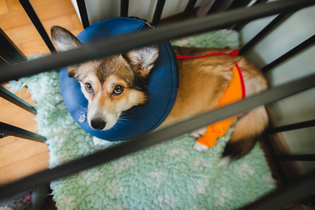 post-surgery bed rest got your dog bored? Try these