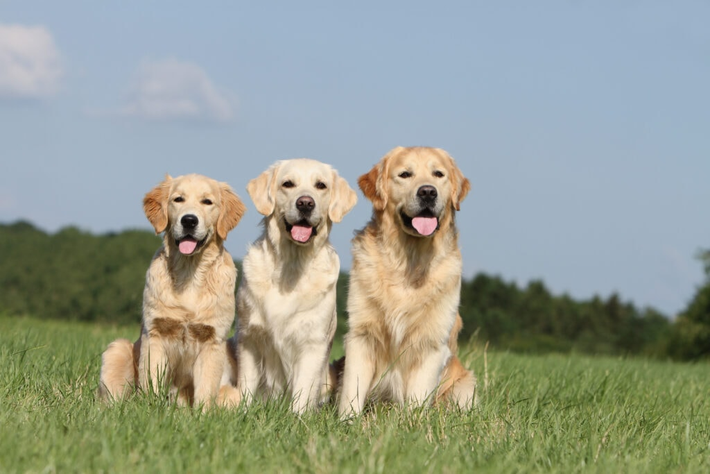 The age of your dog is quite important when considering neutering